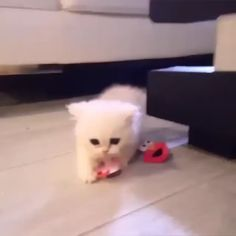 No, my toy. Kittens And Puppies, Cute Cats And Kittens, I Love Cats, Kittens Cutest, Cute Baby Cats, Cute Little Animals, Cute Funny Animals, Cute Animal Videos, Cute Animal Pictures