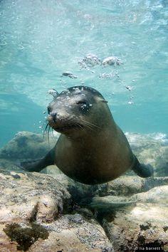 Why, hello there! Cheeky sea lion in La Paz, Mexico.