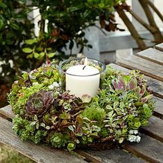Candle Ring with succulent plants. Heads of green cymbidium orchid would look good with this. Succulent Centerpieces, Succulent Wreath, Candle Centerpieces, Candles, Planting Succulents, Succulent Plants, Succulent Terrarium, Candle Rings, Frame Wreath