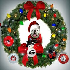 MERRY CHRISTMAS DAWG FANS!!