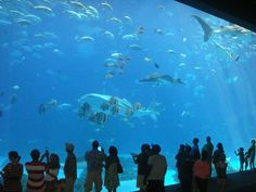 Did you know that the Georgia Aquarium is the largest aquarium in the western hemisphere?