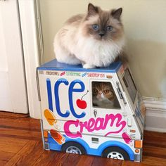 Cat's Fish-Flavored Ice Cream Truck Closes After All Inventory Is Mysteriously Eaten