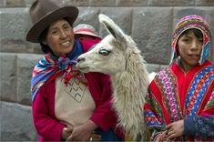 Picture of Woman and his son standing with a llama (Lama glama), Sacred Valley, Cusco Region, Peru stock photo, images and stock photography. Llamas, Cusco Peru, Camel, Stock Photos, Animals, Traditional, Knitting, Google Search, Twitter