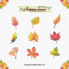Foglie di autunno Acquerello Vettore gratuito