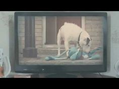 Thinkbox TV - Harvey and Rabbit Best Adverts, Tv Ads, Best Friends Forever, Bff, Rabbit, Advertising, Sugar, Happy, Youtube