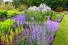 jardim paisagismo, florescendo sálvia