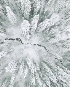 Winter vibes... ❄️ #discoverearth Video by @chriskerksieck