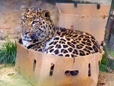 even the big boys cant say no to a cardboard box......