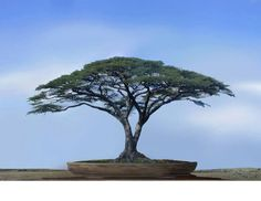 want to make one like this.. though this looks photoshopped.. Bonsai