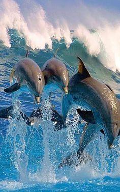 flag of Ocean Simply breathtaking - sea life Underwater Animals, Underwater Creatures, Ocean Creatures, Cute Baby Animals, Animals And Pets, Funny Animals, Beautiful Sea Creatures, Animals Beautiful, The Ocean
