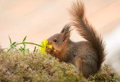 loving flowers to much by geertweggen via http://ift.tt/1P607RQ