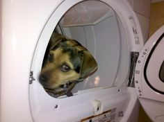 Yes...she's in the dryer.