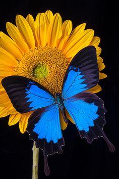 Blue Wings By Garry Gay