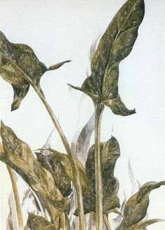 Charles Demuth - pommes et vert verre Charles Demuth, Reproduction, Calla Lily, Oeuvre D'art, Les Oeuvres, Plant Leaves, Moose Art, Watercolor, Abstract