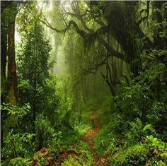 wall mural primeval forest