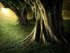 el amanecer de tu vida en el bosque del mundo complejo #amaneceres #bosques