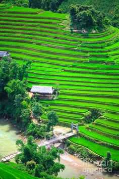 ✯ Green rice field terraces at northern Vietnam