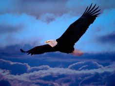 When it rains, most birds head for shelter, the Eagle is the only bird that, in order to defeat the rain, starts flying above the cloud.. http://vinayakmehra.blogspot.in/2012/12/defeat-your-enemy.html