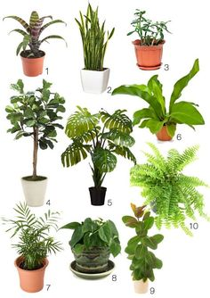 how to make your room look like a jungle