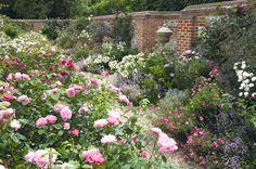 Gartenzauber | Englische Rosen