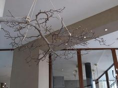A bough suspended above the dining room at the Lloyd Hotel, which we wrote about in Hotels, Lodging