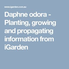 Daphne odora - Planting, growing and propagating information from iGarden