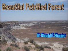 Beautiful Petrified Forest by Dr. Ronald Shapiro, via Slideshare