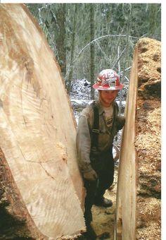 Big Logs in Oregon