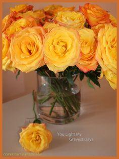 yellow-orange heirloom roses