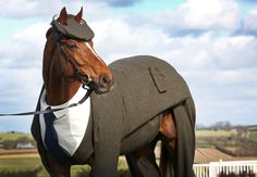 The beginning of the Cheltenham Festival 2016 is marked by stallion Morestead in a made-to-measure Harris Tweed three-piece suit Three Piece Suit, 3 Piece Suits, Cheltenham Horse Racing, Costumes En Tweed, Horse Suit, Gq, Horse Halloween Costumes, Animal Costumes, Dog Dye