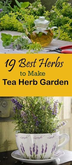 Like to sip herbal tea? Check out 19 Best Herbs To Make Tea Herb Garden #herbsgarden