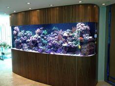 aquario__16