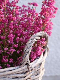 Heather - not an herb but can be dried/hung as well.