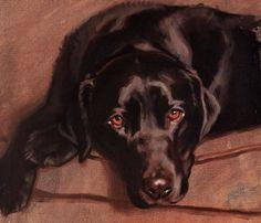 Hazel Morgan, brown lab