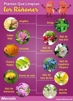 plantas curativas para el higado inflamado