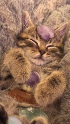 Cute Baby Cats, Cute Little Animals, Image Chat, Cat Aesthetic, Photo Chat, Pets 3, Pretty Cats, Cat Love, Cats And Kittens