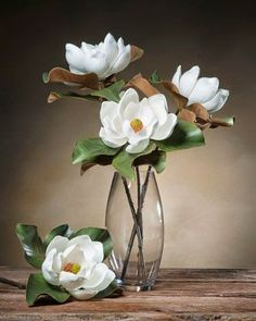 This gorgeous large magnolia diameter bloom) looks like it was just cut from the tree on a Southern Georgia Plantation. You won't find a silk magnolia that looks or feels more real than this one. Faux Flowers, Silk Flowers, White Flowers, Paper Flowers, Beautiful Flowers, Art Floral, Floral Design, Ikebana, Flor Magnolia