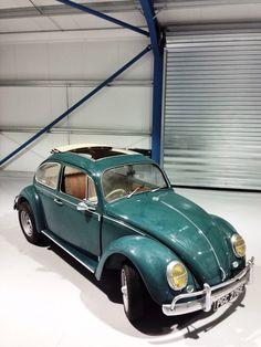 67 ragtop beetle