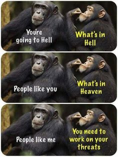 You're Going To Hell Chimpanzees