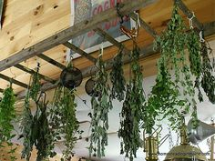 What a wonderful use in the garden :: a herb drying rack