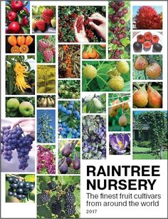 Our catalog is packed full of great tips and info on how to succeed in your garden! Get your own copy at http://www.raintreenursery.com/Catalog_Requests.html