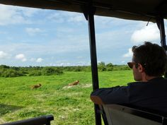 Chobe National Park is home to the biggest population of elephants. Experience this beautiful park in multiple ways and see the great variety in wildlife. Chobe National Park, National Parks, Beautiful Park, Lions, Surfing, Wildlife, Elephant, Africa, Game