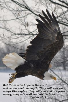 Isaiah 40:31..my grandpa loved eagles because of this verse Inspirational #Biblequote from the book of #Isaiah