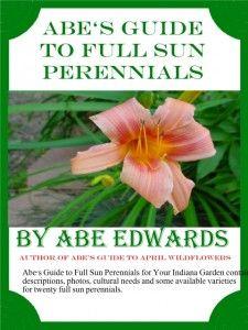 perennial, flower, full, sun