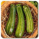 Organic Cocozelle Zucchini