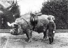 Pig rider, ca. 1930s