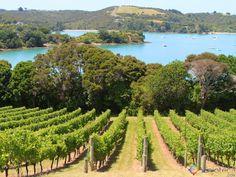 Vinhos Nova Zelândia - Waiheke Island
