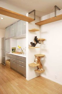 stagger small shelves back and forth across a corner for a cat ladder. much che… stagger small shelves back and forth across a corner for a cat ladder. much cheaper and not as tacky. Install next to stove! Japanese Cat, Japanese Animals, Unique Cats, Unusual Pets, Exotic Pets, Cat Room, Dog Play Room, Cat Decor, Crazy Cats