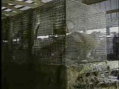 Stella McCartney Narrates Shocking Fur Farm Investigation