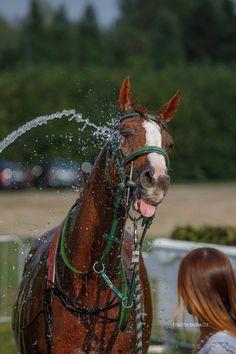 Crazy Animals, Thoroughbred, Horse Racing, Rabbit, Horses, Bunny, Rabbits, Bunnies, Horse